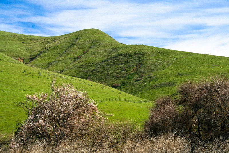 Springtime Scene from Marsh Road, Contra Costa County CA