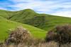Springtime Scene from Marsh Road, Contra Costa County CA