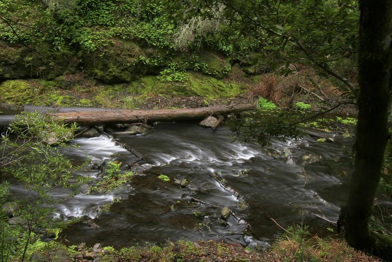 Lagunitas Creek, Marin County CA
