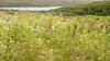Meadow Scene and Abbotts Lagoon
