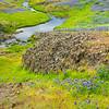 Purple Lupine, Seasonal Stream and Grasses, and Volcanic Rock