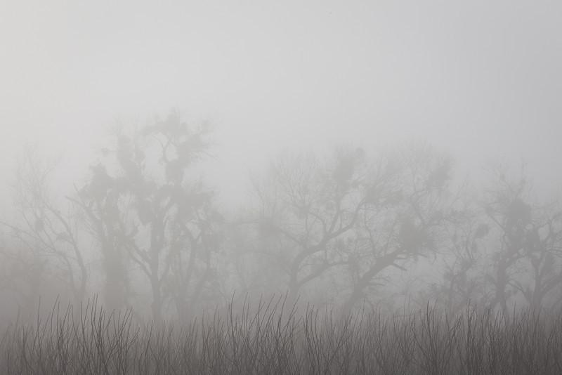 Foggy Winter Morning, Highway 26, CA