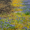 Yellow and Purple Wildflowers and Volcanic Rock