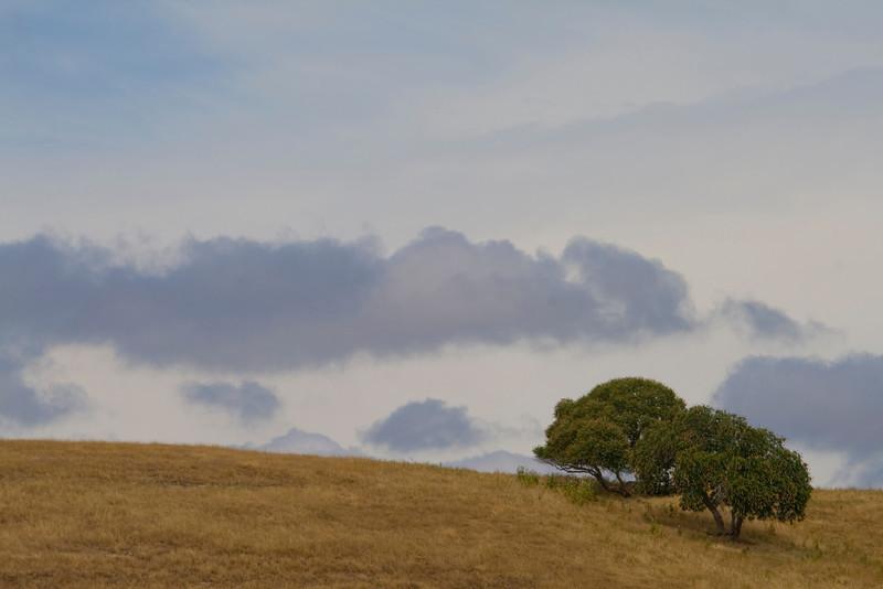Two Oaks, San Joaquin County, CA