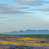 Clouds, Sierra Buttes, and Wildflowers