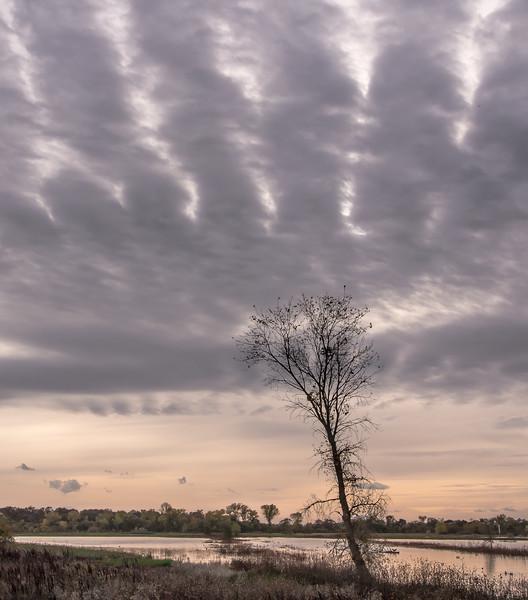 Rain Coming, Cosumnes River Preserve, CA