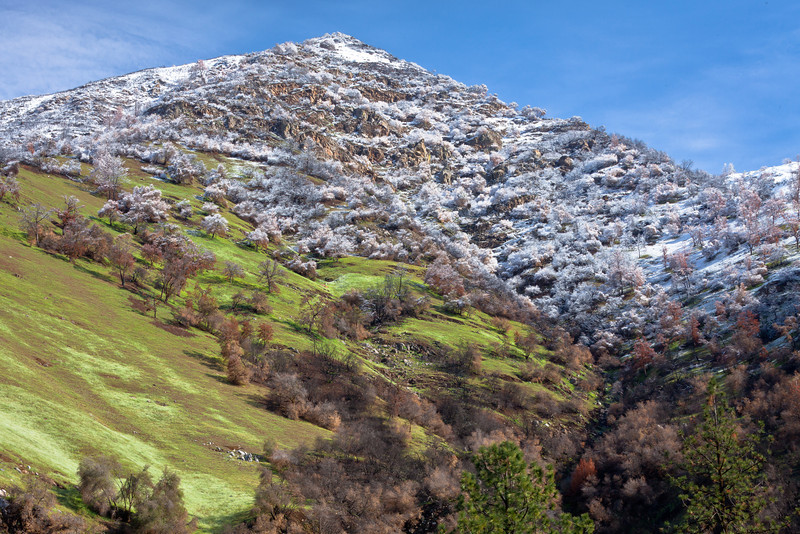 Spring Snow Cap, Mariposa County CA