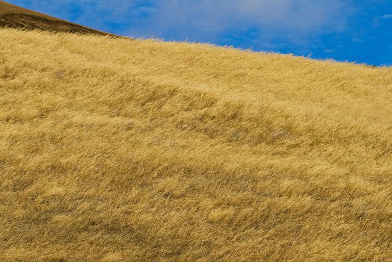 Summer Pampas Grass and Sky, Altamont Pass, Livermore CA