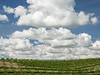 Stacked Clouds over Vineyard