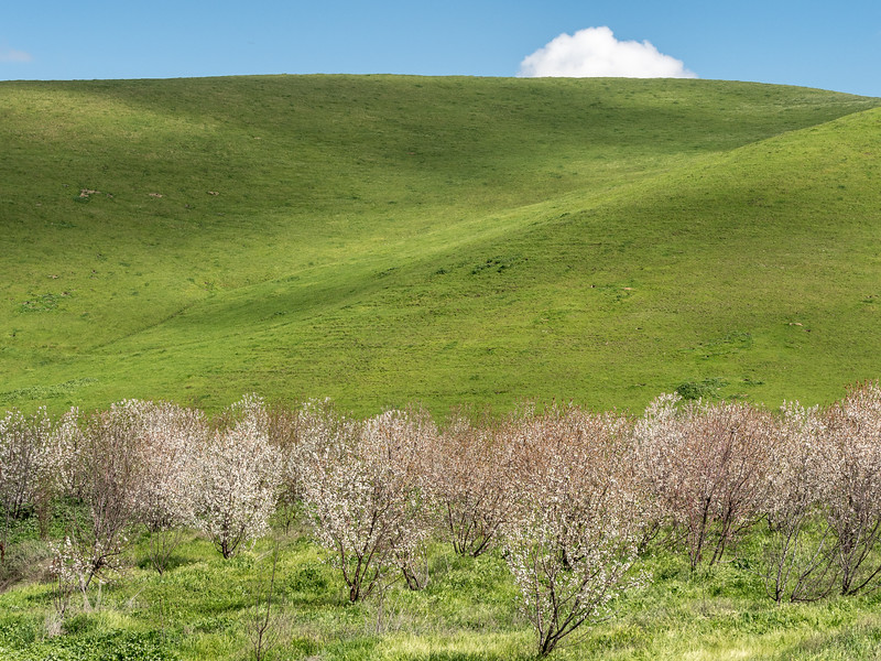 Springtime Blossoms, Green Hills, Dappled Light, and Cloud