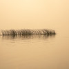 Mid-water Reeds Enveloped by Wildfire Smoke