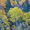 Mixed Autumn Foliage