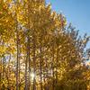 Sunstar and Autumn Aspens