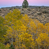 Autumn Aspens, Pine, and Pastel Sunset Sky