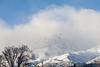 Fresh Snow, Clouds, Bare Cottonwood, and Bird, Eastern Sierras CA