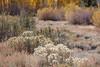 Rim Lit Autumn Scene, Eastern Sierras CA