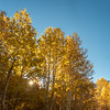 Autumn Aspen Color and Sunstar