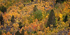 Autumn Colors on Mountain Flank, Rock Creek Canyon, Eastern Sierras, CA
