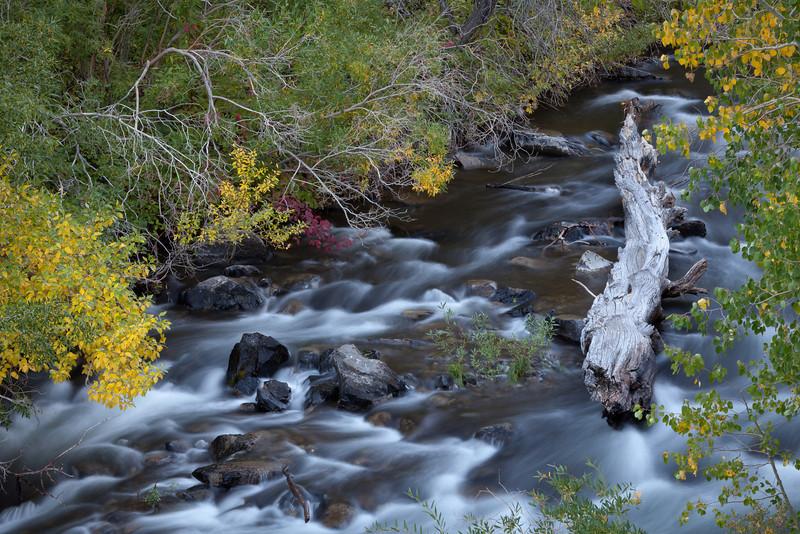 Fall and Fallen Log, Rush Creek, CA