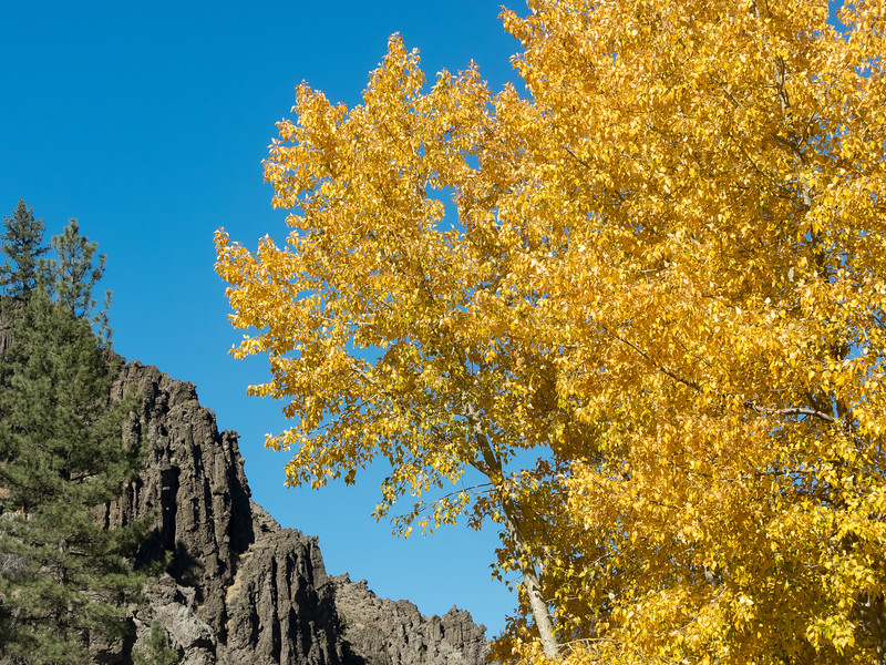 Fall Cottonwoods and Dark Rock