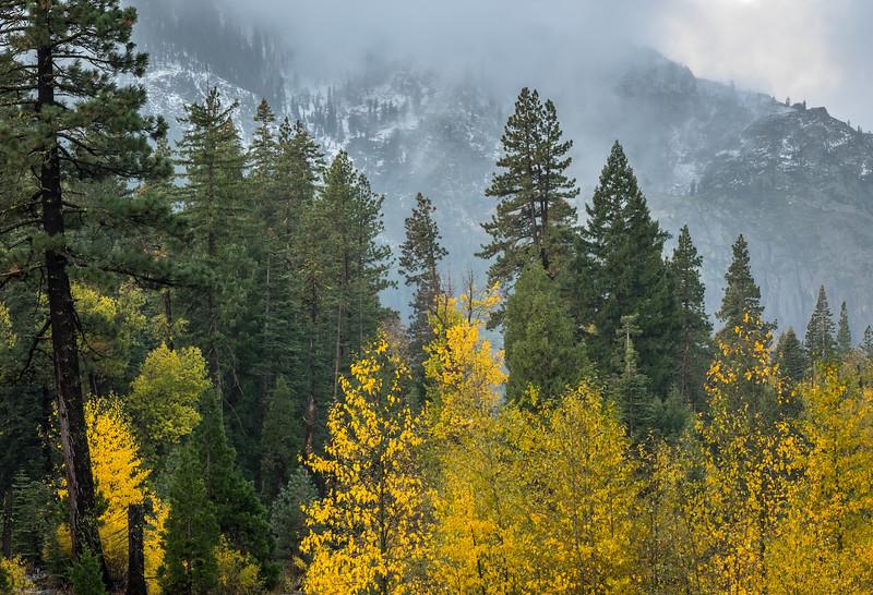 Autumn Aspens, Pines, and Fresh Snow on the Mountains