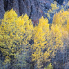 Autumn Aspen and Limestone Cliffs