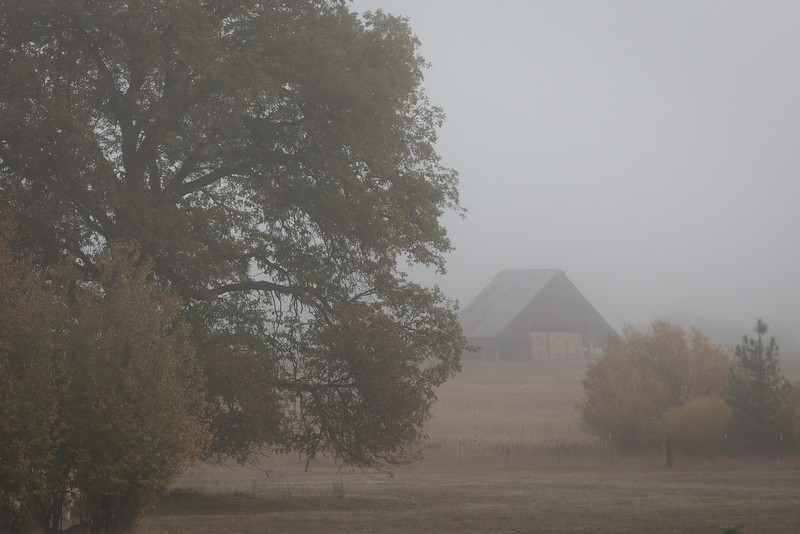 Barn in Morning Fog, Quincy CA