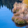 Autumn Grasses, Yellow Willow Leaves, and Pine Tree Reflection