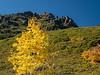 Color-Splotched Hillside