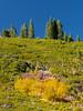 Yellow Foliage, Green Carpet, Blue Sky