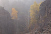 Fog Shrouding Yellow Aspens in Frenchman's Canyon, Near Chilcoot CA