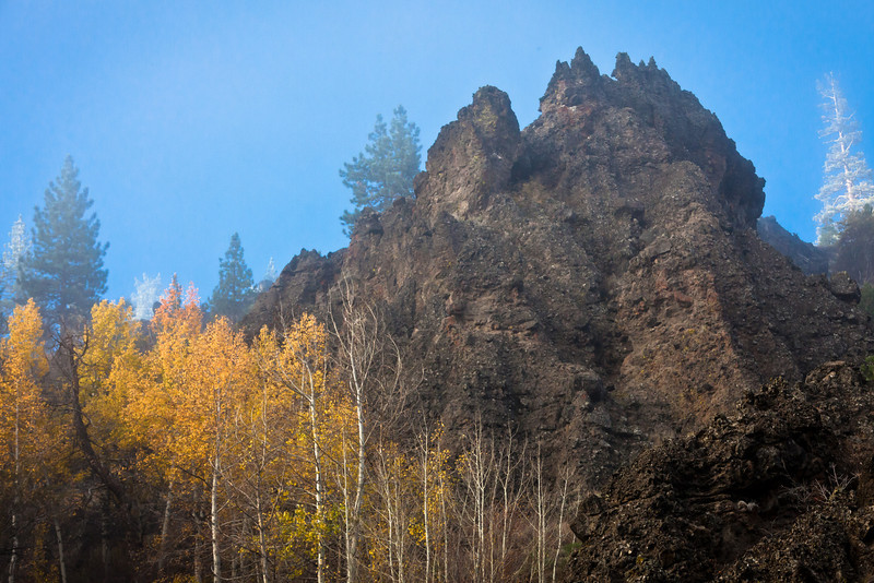 Aspens, Rock Outcroppings, and Sun-Soaked Pine Trees, Near Chilcoot CA