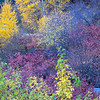 Mixed Autumn Palette