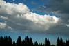 Pine Forest Silhouette and Storm Clouds, Plumas County, CA