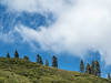 Pines on Ridge Line Framed by Clouds