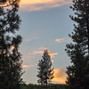 Small Pine Surrounded by Larger Ones and Sunset-Infused Clouds