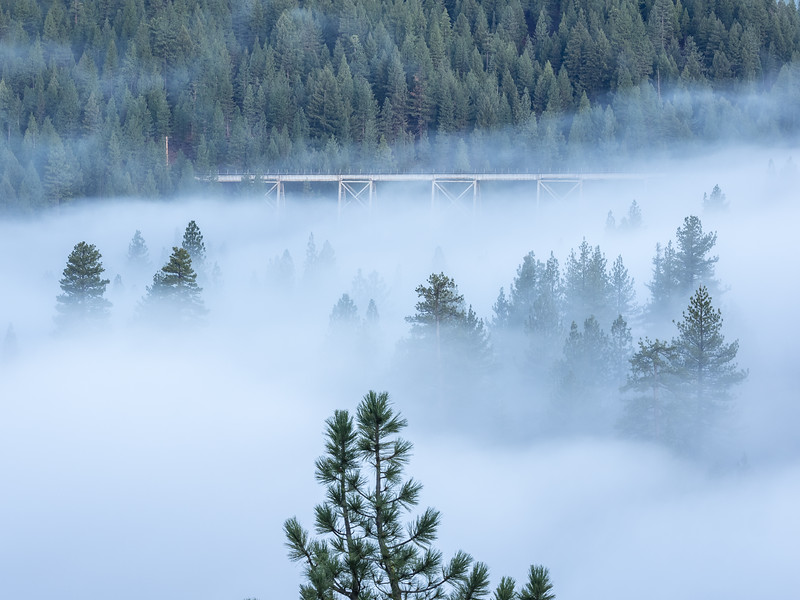 Fog, Pine Forest, and Train Trestle