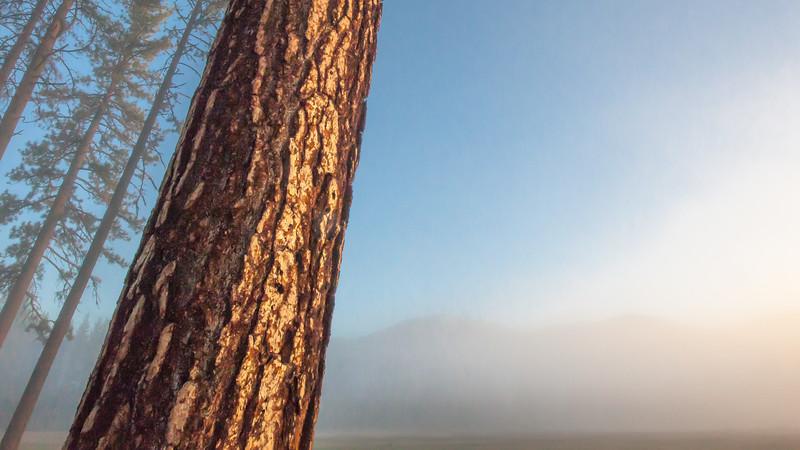 Morning Fog and Sunrise, Graeagle CA
