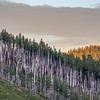 Alpenglow Light and Old Forest Fire Area