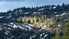 Morning Spotlight on Pine Foreast