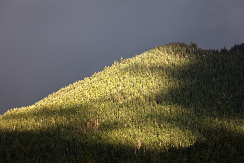Storm Light Near Bassets, Tahoe National Forest