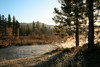 Morning Light on the Middle Fork Feather River, Graeagle CA