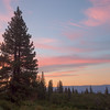 Pine Tree Silhouette and Pastel Sunset
