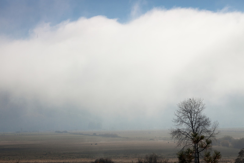 Fog Rolling through Genesee Valley, Near Greenville CA