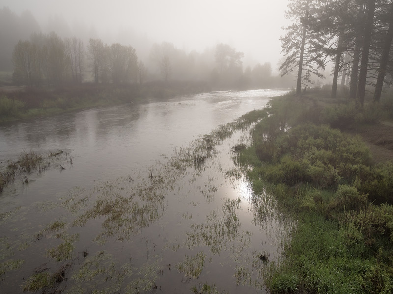Foggy Morning Scene in Early Spring, Middle Fork Feather River