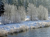 Fresh Snow on Bankside Trees, Middle Fork Feather River, Blairsden CA