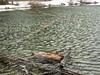 Wind-Swept Smith Lake and Fallen Stump Pattern