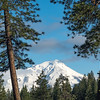 Mt Shasta Flanked by Pine Trees and Clearing Clouds