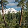 Mt Shasta Framed by Pine Trees and Low Clouds