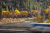 Fall Aspens, Truckee River, and Amtrak Train, Near Truckee CA